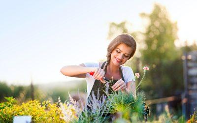 Les meilleurs outils du jardinier en herbe à domicile